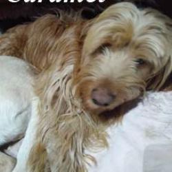 Caramel (adopté)